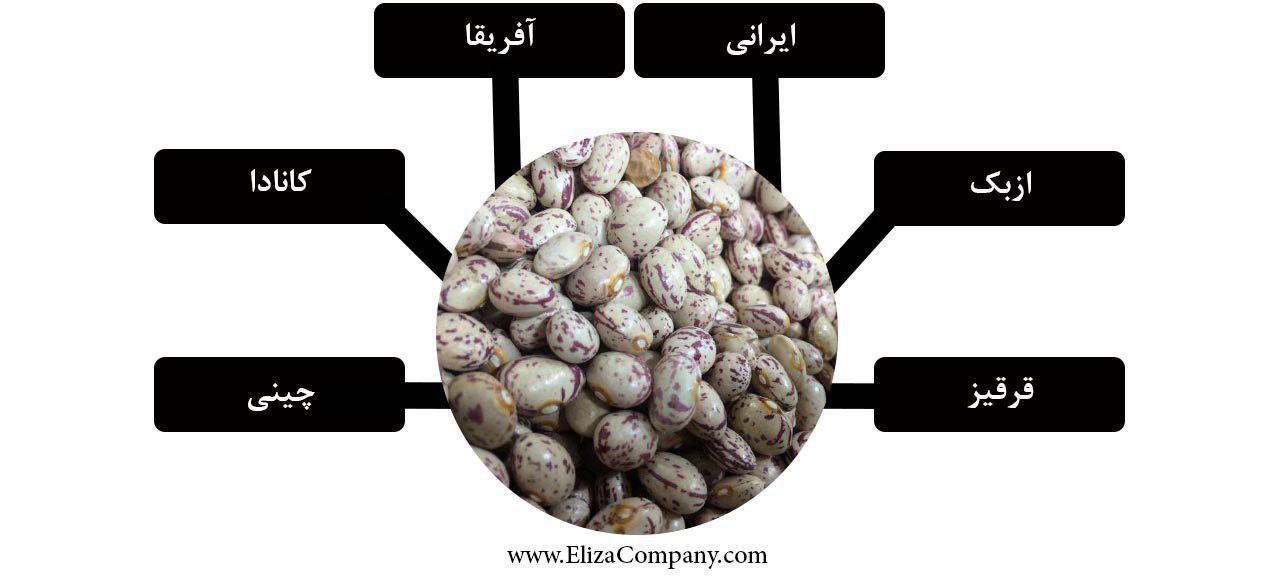 واردات لوبیا چیتی آفریقا