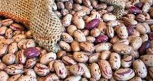 فروش لوبیا چیتی