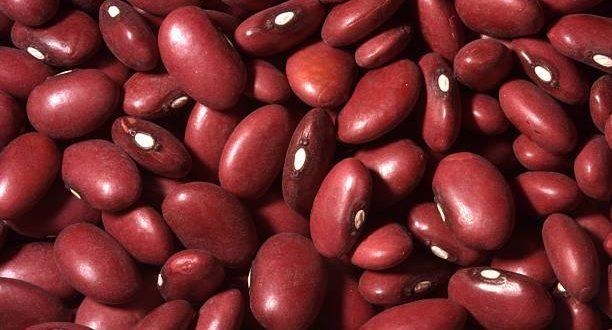 فروش لوبیا گلی