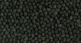 فروش نخود سیاه