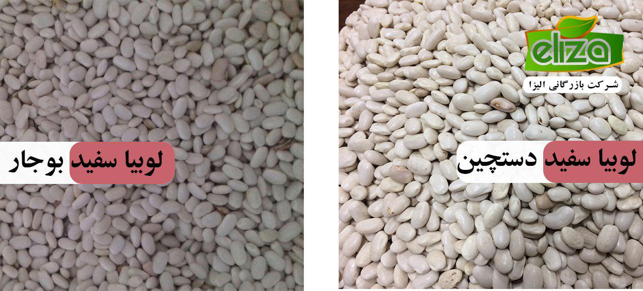 صادرات لوبیا سفید