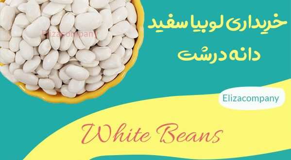فروش لوبیا سفید دانه درشت