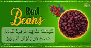 قیمت عمده لوبیا قرمز