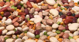 قیمت انواع لوبیا