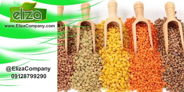 نمایندگی فروش انواع حبوبات در کرج