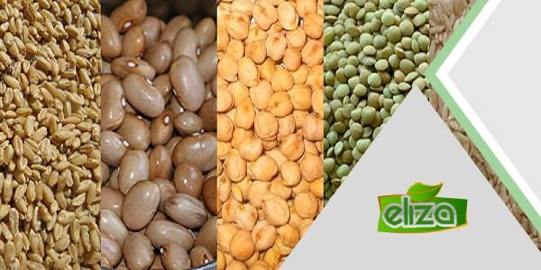 خرید مستقیم حبوبات از کشاورزان