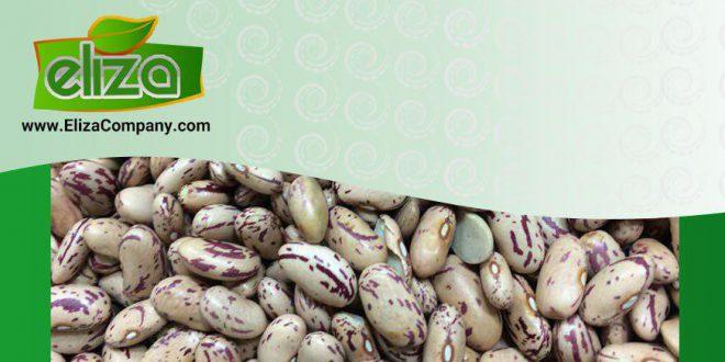 فروش لوبیا چیتی آفریقا