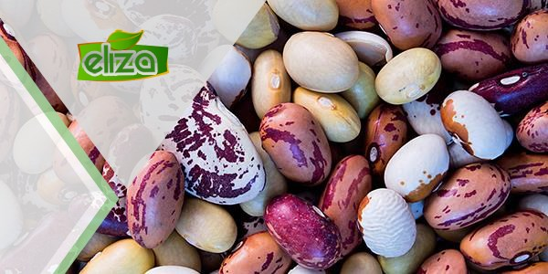 مرکز فروش بهترین کیفیت لوبیا صادراتی