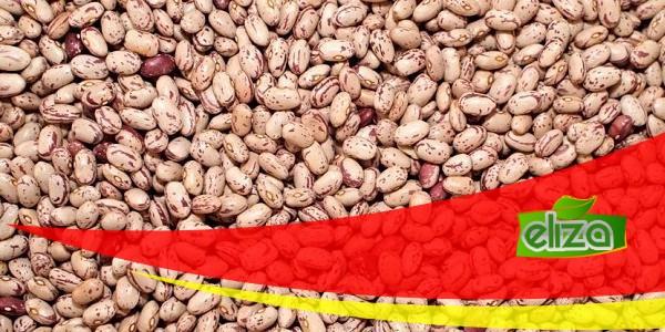 سایت فروش عمده لوبیا چیتی پولیش خمین